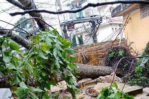 Bắc Kạn: Tập trung khắc phục hậu quả thiệt hại do tố lốc, mưa đá