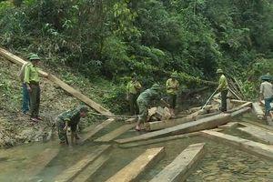 Quảng Bình: Phát hiện vụ khai thác gần 100m3 gỗ quý