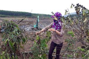 Gia Lai: Tạm dừng hoạt động mỏ đá bị dân tố gây ảnh hưởng đến vườn cà phê