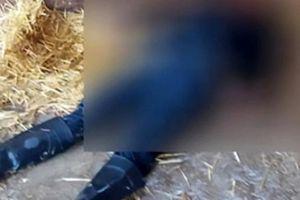 Nhân viên vườn thú bị sư tử vồ chết ở Mexico