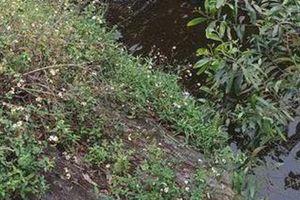 Huế: Bàng hoàng phát hiện thi thể 2 nam thanh niên dưới mương nước