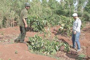 Báo động tình trạng phá hoại cây trồng của người dân