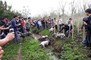 Chó săn và lợn rừng 'tử chiến': Hành động đầy phản cảm, gây nguy hiểm không thể chấp nhận