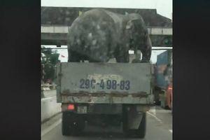 Hà Tĩnh: Thực hư clip voi 'làm xiếc' trên Quốc lộ 1A