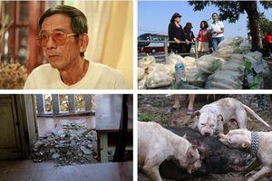 Tin tức Hà Nội 24h: Bàng hoàng sập trần trường học giữa Thủ đô; Bầy chó săn lao vào giằng xé lợn rừng