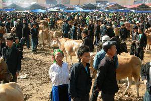 Chợ bò Mèo Vạc