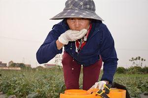 Ba tuyệt chiêu trồng rau sạch khiến mọi người bái phục