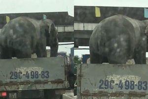 Clip: Hãi hùng cảnh xe tải chở voi chạy băng băng trên QL1A