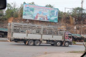 Quảng Trị: Khu cách ly kiểm dịch động vật hoạt động sát dân cư gây nhiều lo ngại