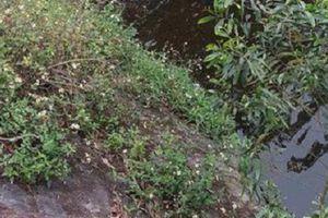 Đi cắt cỏ, hoảng hồn phát hiện thi thể 2 thanh niên dưới chân cầu