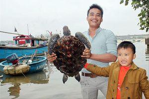 Thả hai cá thể rùa quý hiếm về biển