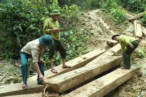 Bí thư Tỉnh ủy Quảng Bình chỉ đạo làm rõ trách nhiệm, xử lý nghiêm vụ phá rừng tại Tuyên Hóa
