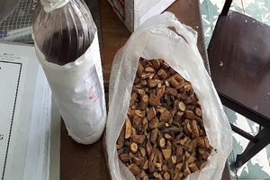 Nghệ An: 3 người chết do uống rượu ngâm lá ngón