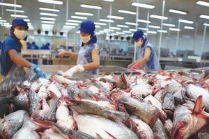Mỹ tăng thuế chống bán phá giá cá tra lên 5 lần, VASEP tính khởi kiện