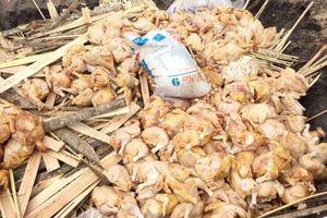 'Chặn đường' gần 500 kg thịt gà đã bốc mùi hôi thối trên đường đi tiêu thụ