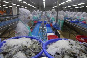 Tôm Việt cũng gặp khó ở thị trường Mỹ