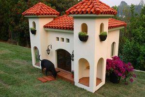 Những dịch vụ xa xỉ dành cho chó cưng của giới nhà giàu