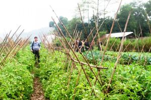Hiệu quả từ hoạt động hỗ trợ nông dân kết nối thị trường