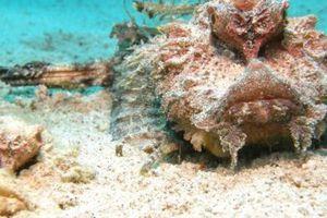Điểm mặt những 'quái thú' ẩn trốn dưới đáy đại dương