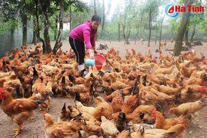 Đàn ông đánh cá, đàn bà nuôi gà ở làng biển Cẩm Hòa