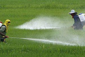 Ngân hàng Thế giới cảnh báo ô nhiễm trong nông nghiệp ở Việt Nam