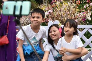 Hàng chục nghìn người dân đến lễ hội hoa anh đào mỗi ngày