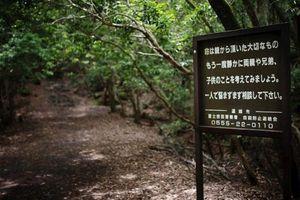 Khu rừng 'tử thần' ở Nhật Bản