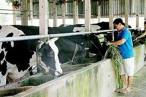 117 tỷ đồng đào tạo nghề nông thôn