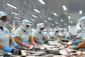 Mỹ lập 'hàng rào' đối với cá tra, doanh nghiệp Việt gặp khó