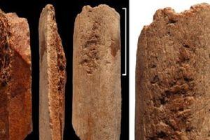 Khám phá dụng cụ bằng xương 115.000 năm tuổi khiến giới khoa học ngỡ ngàng