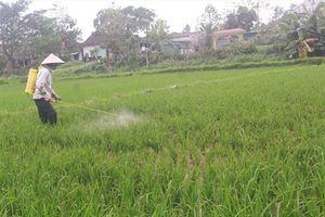 Sâu bệnh trên lúa xuân Nghệ An có xu hướng tăng