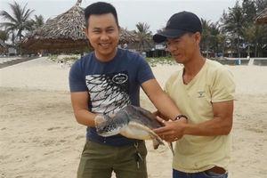Chủ quán nhà hàng ở Quảng Nam thả rùa 6,3kg quý hiếm về đại dương