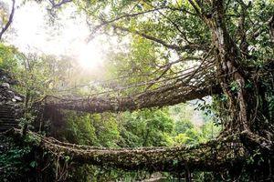 Shillong, miền cao xanh mát giữa xứ Ấn