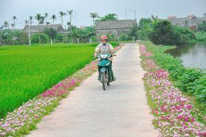 Những con đường hoa của làng quê Hải Dương