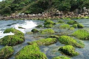 Nam Ô dưới chân resort: Liên Chiểu đề nghị quy hoạch lại dự án