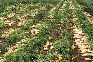 Ứng phó với việc nông sản rớt giá