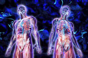 Phát hiện bộ phận mới trong cơ thể người