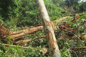 Đắk Nông: Ủi rừng phòng hộ vành đai biên giới để làm đường