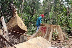Quảng Nam: Xác định 5 đối tượng trong vụ phá rừng ở huyện Đông Giang