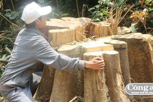 Rừng phòng hộ Sông Kôn bị tàn phá