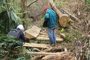 Rừng Quảng Nam liên tiếp bị chặt hạ
