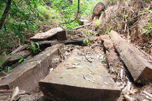 Đông Giang (Quảng Nam) rừng phòng hộ bị chặt phá nghiêm trọng