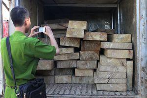 Không xử lý gỗ lậu, trưởng ban quản lý rừng bị đình chỉ chức vụ