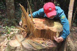 Xác định được các nghi phạm liên quan đến vụ phá rừng phòng hộ Đông Giang