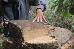 Khởi tố vụ án, tạm giữ ba đối tượng phá rừng phòng hộ ở Quảng Nam