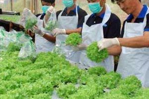 Du lịch nông nghiệp: Bài học từ Đài Loan, Nhật Bản