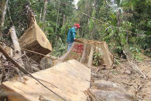 Vụ phá rừng ở Quảng Nam: 5 người khai nhận phá rừng