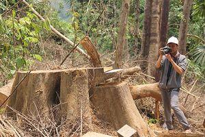 Vụ phá rừng ở Quảng Nam: Khởi tố vụ án, xác định 5 đối tượng