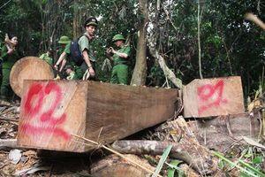 Làm rõ trách nhiệm của cấp ủy, chính quyền để mất rừng