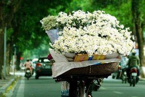 Hà thành kim cổ ký: Hoa ở Hà Nội xưa